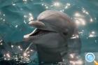 Дельфинотерапия на о.Бали