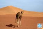 Айерс Рок: Катание на верблюдах