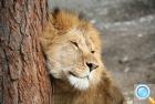 Serengeti-Park – сафари